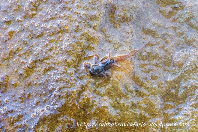 larve1